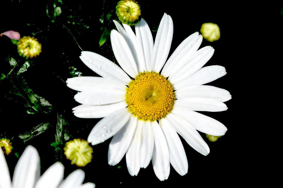 daisy_DSF4543.jpg