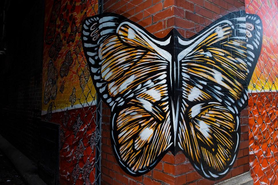 butterfly_DSF6473.jpg