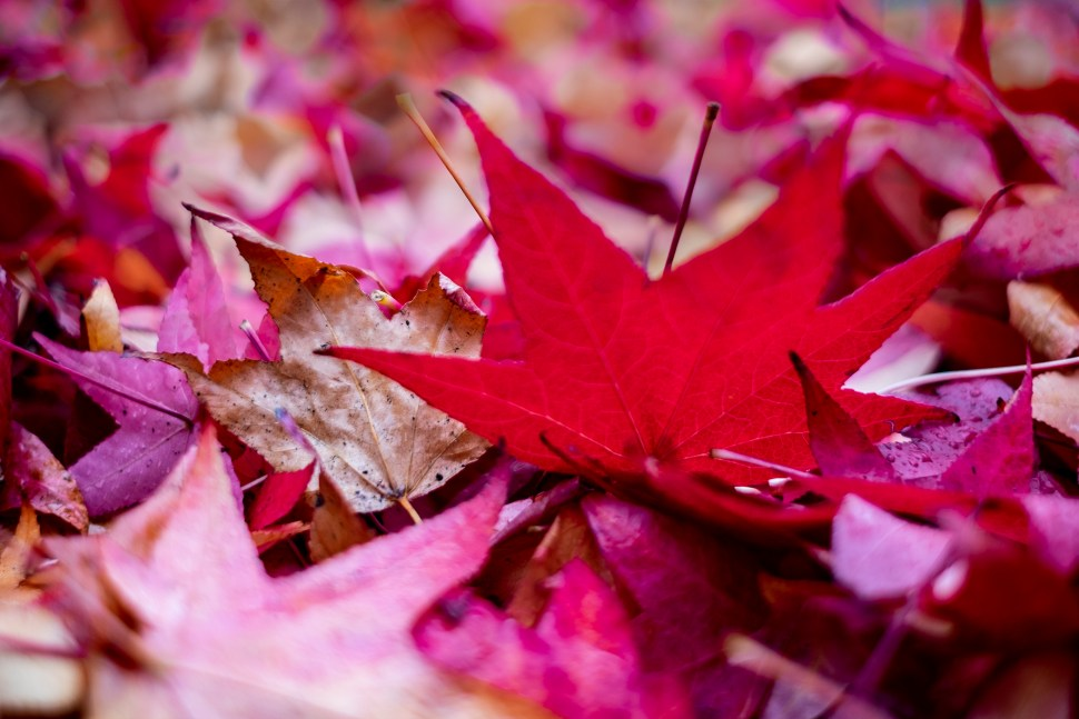 leaves_DSF0991.jpg