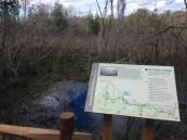 Views along the trail