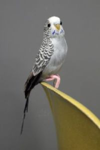 grayson-the-grey-budgie-a-fabulous-artificial-bird-16289-p[ekm]233x349[ekm]