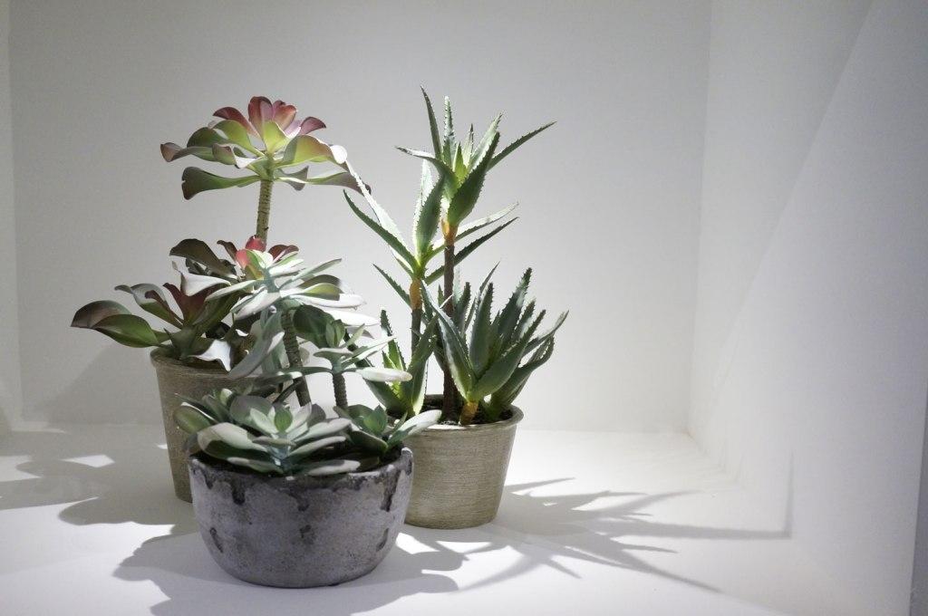 sofology-plants