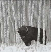 Detail of Manitoba Wood Bison from the Quilts of Canada Series by Bridget OFlaherty contact on Facebook