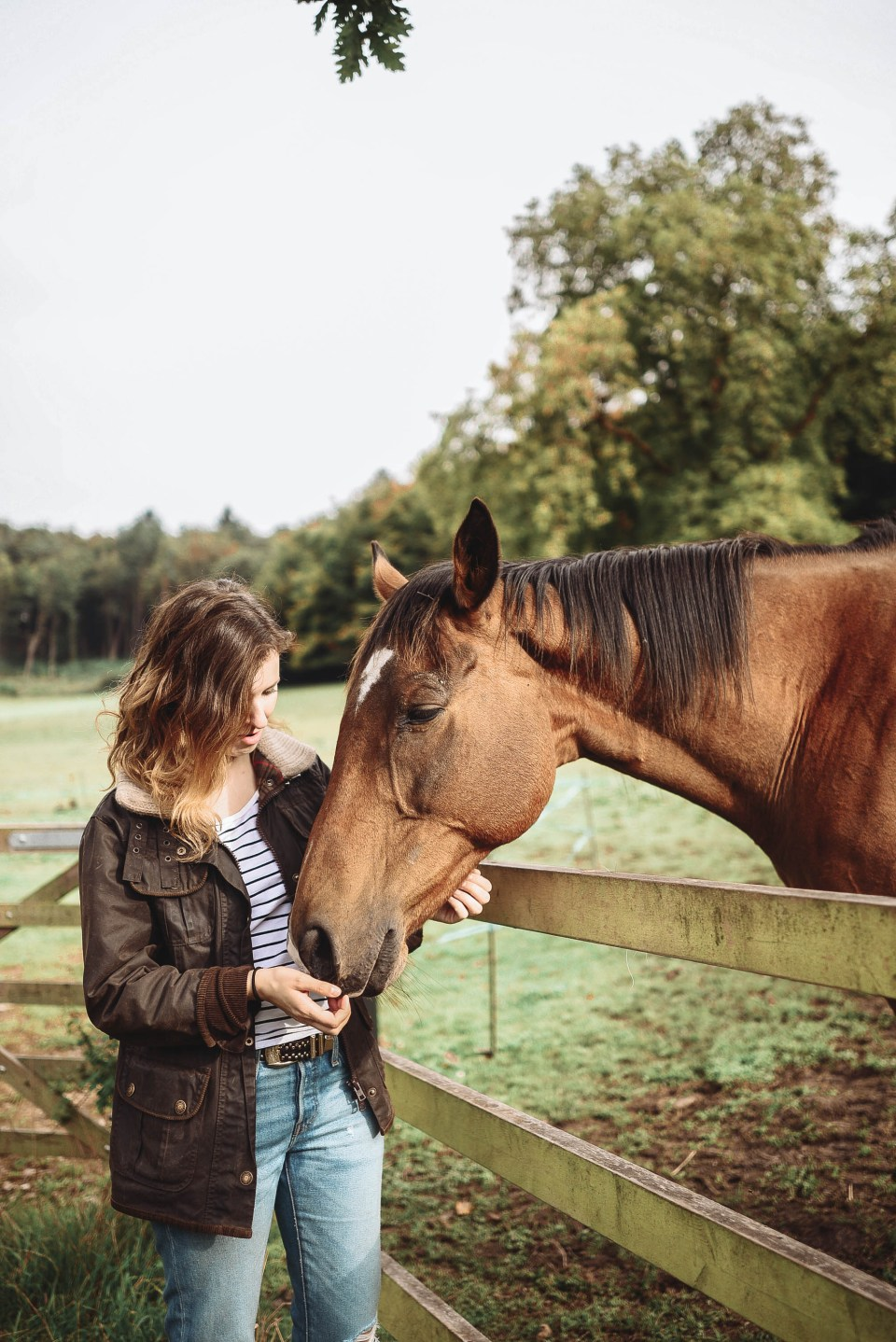 Horses at Old Wardour Castle