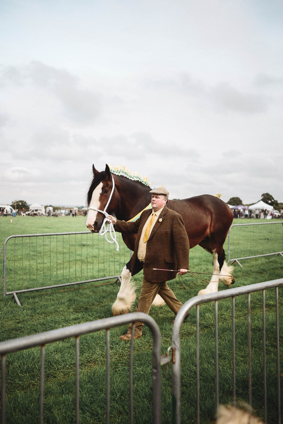 Wessex Heavy Horse Show in the English Countryside