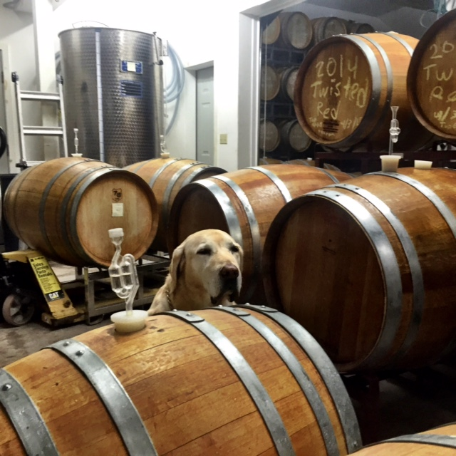 cute with dog's head on the barrel