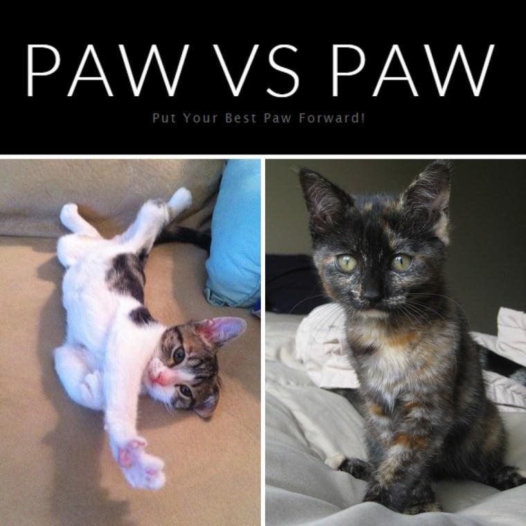 Paw vs. Paw showdown