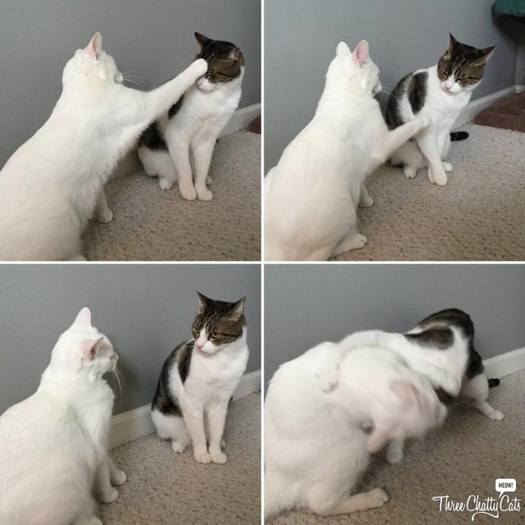 Sophie bops Dexter