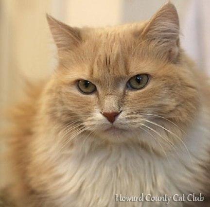 Howard County Cat Club