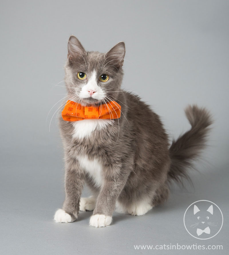 Cats in Bow Ties