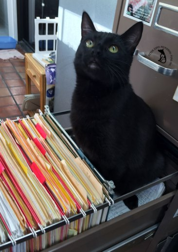 black cat sitting in file drawer