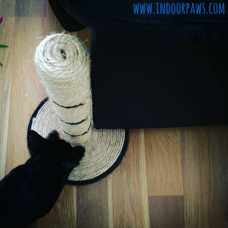 black cat using scratcher