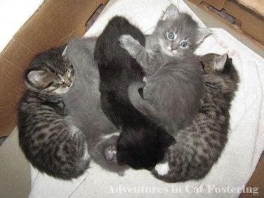 kittens in a cardboard box