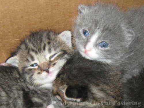 two kitten faces