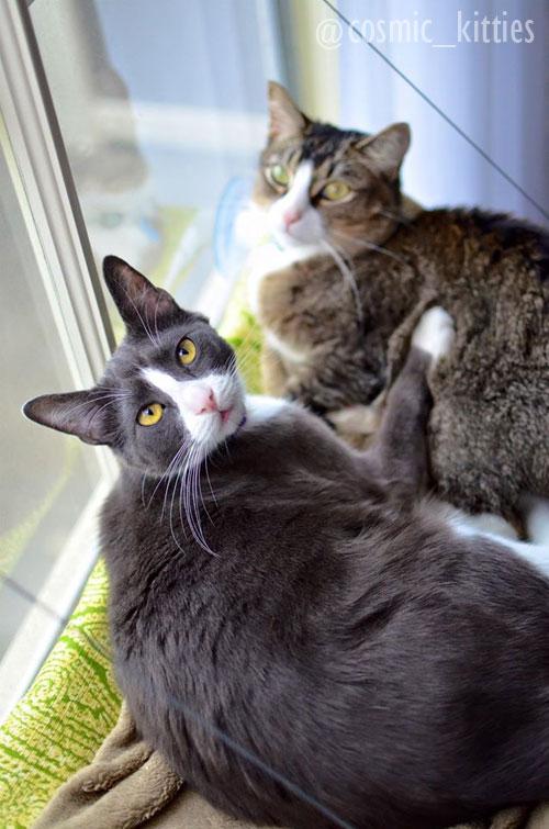 tuxedo cat sitting in window