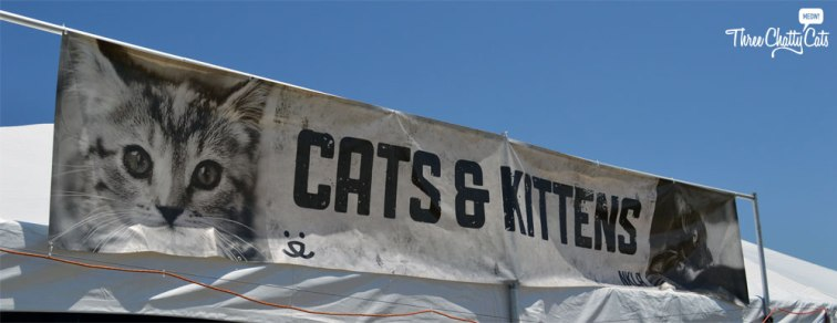 cats and kittens banner