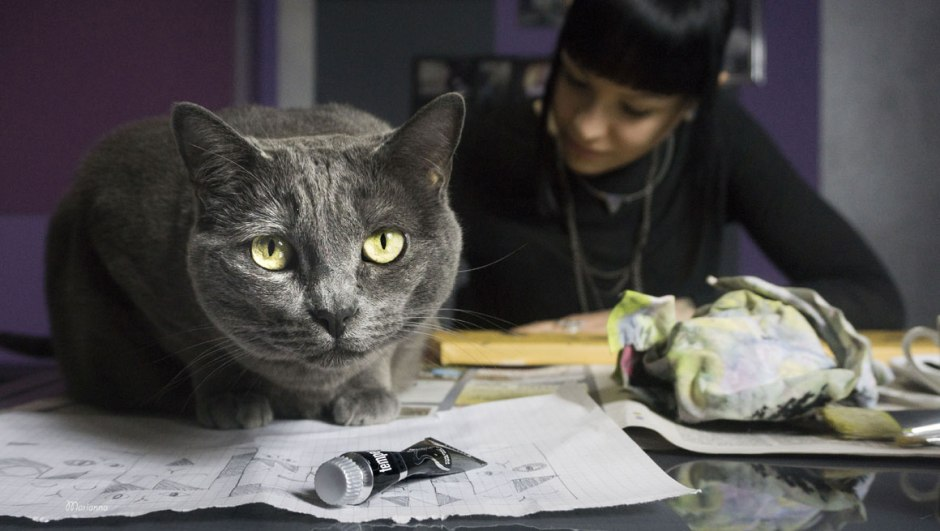 cat on desk with woman in background