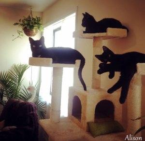2016-06-17_BlackCats02_Alison.jpg