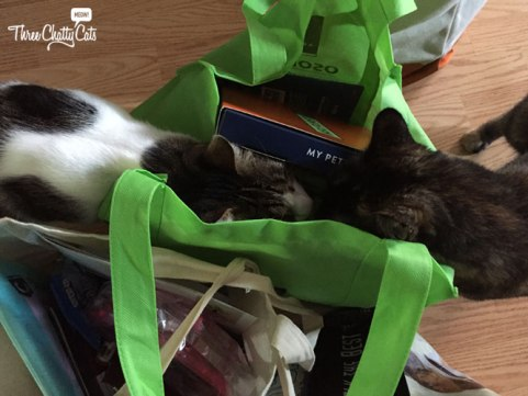 tabby and tortie cats looking into bags