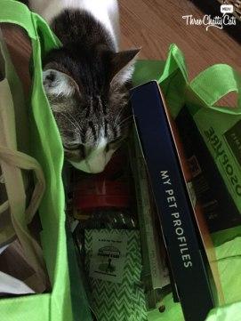 tabby cat looking in bag