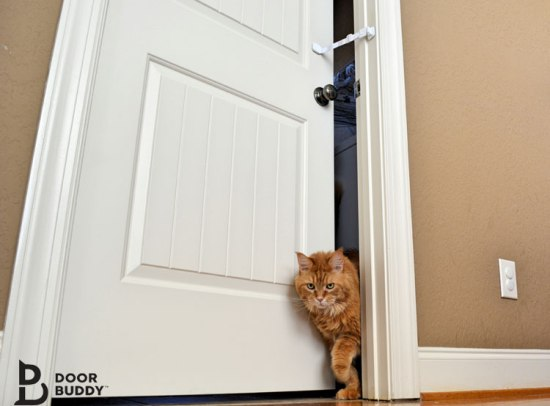 ginger cat exiting room
