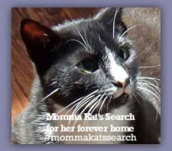 momma-kats-search-badge.jpg