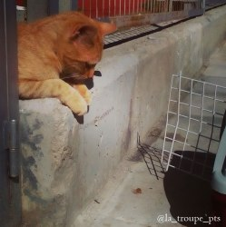 ginger cat looking at carrier