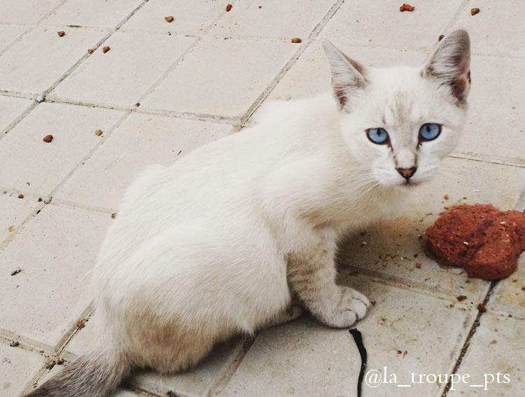 feral kitten eating