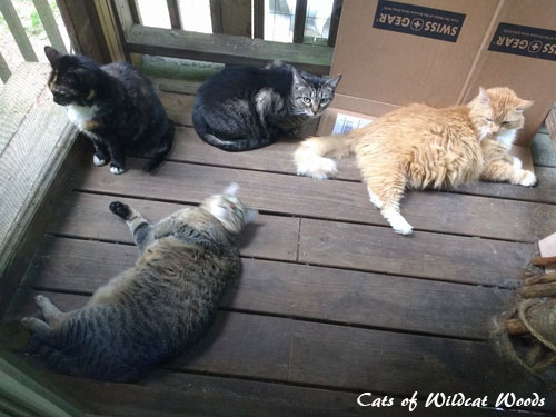 cats enjoying the screened porch