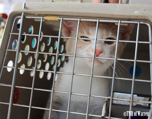 TNR of Warren, cat in carrier