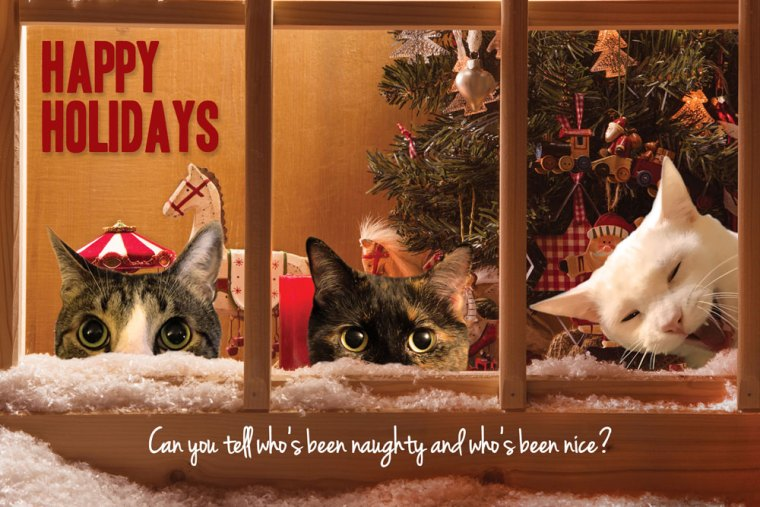 holiday card with three cats