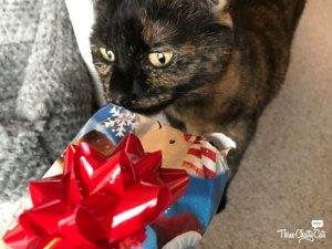 tortie cat inspecting present