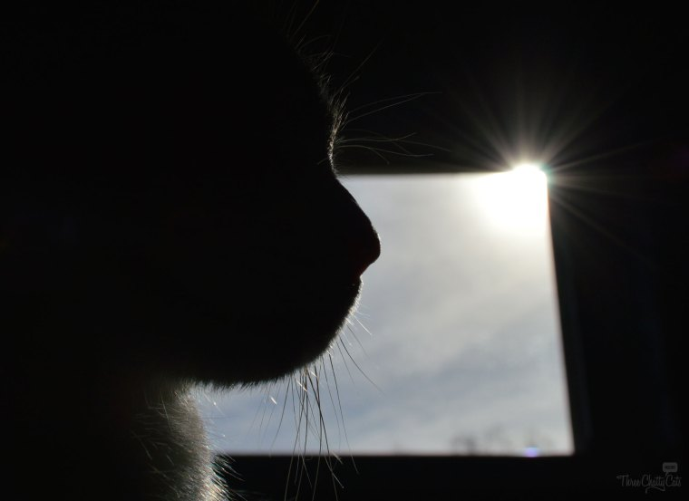 cat silhouette in front of window