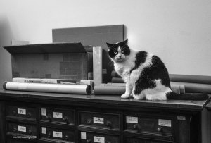 "Library cat Byron | ""C-AT WORK"" by Marianna Zampieri"