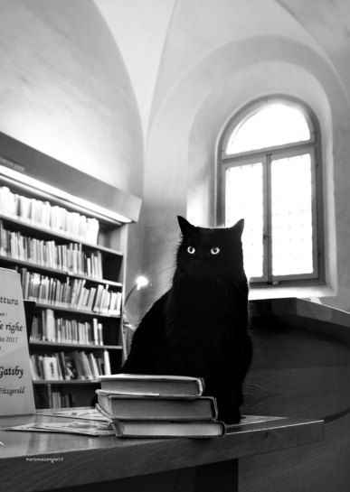 "Library cat Obama | ""C-AT WORK"" by Marianna Zampieri"