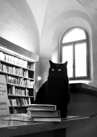 "Library cat Obama | ""C-AT WORK"" by Marianna Zampieri"