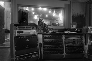 "Recording studio cat Athena | ""C-AT WORK"" by Marianna Zampieri"