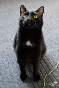 Juno, foster cat