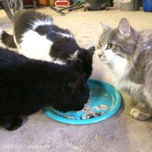 cats feeding in cat colony