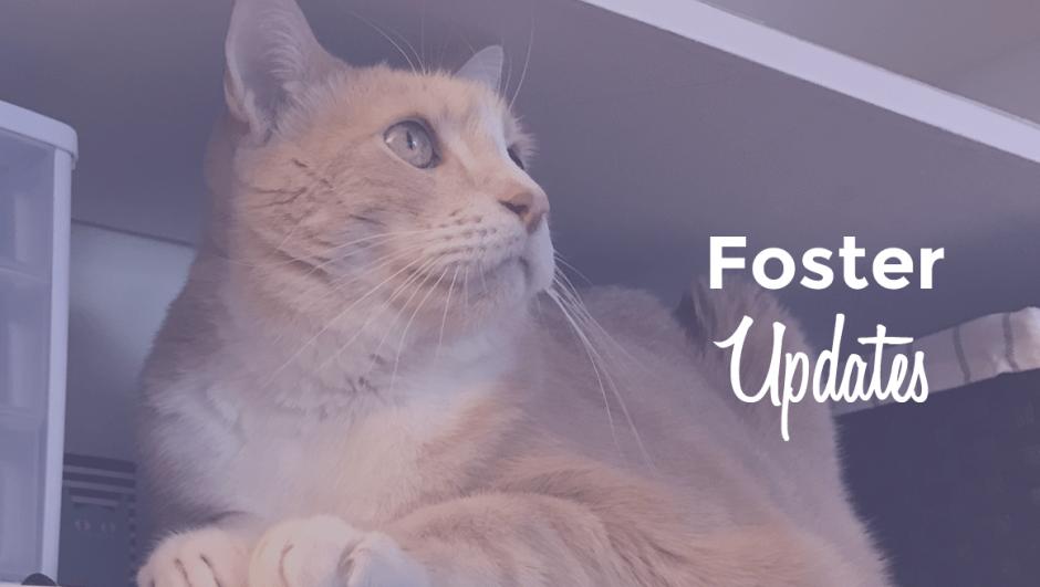 Foster Updates