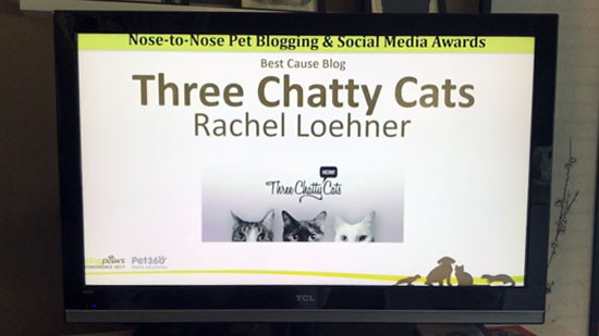 Three Chatty Cats | Best Cause Blog