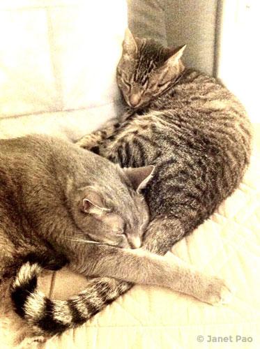 Sigfrey and Sampson