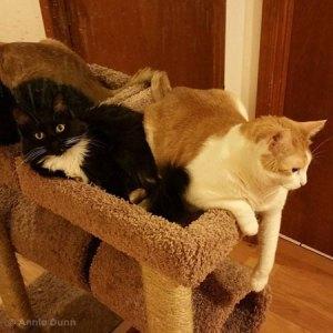 cats on a scratcher | Annie Dunn