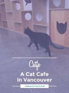 Catfe - A Cat Cafe in Vancouver