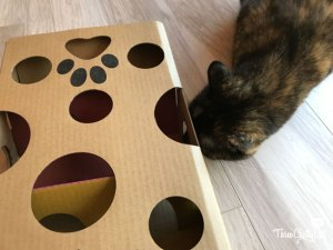 tortie cat with treat maze toy