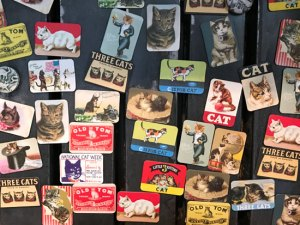 cat magnets at Catfe
