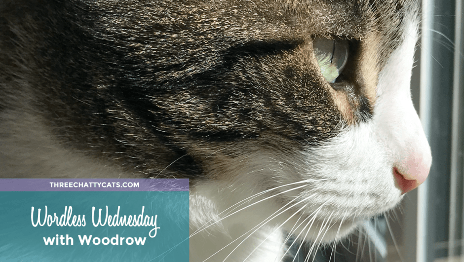 Wordless Wednesday with Woodrow