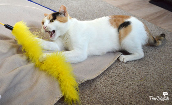 calico cat playing with toy