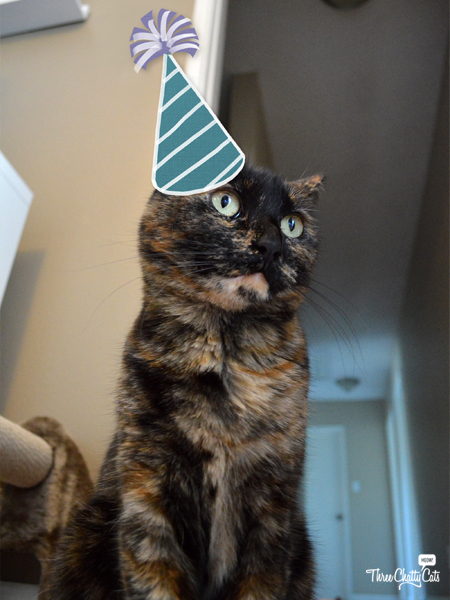 tortie cat celebrating gotcha day