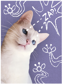 white cat zapping bugs